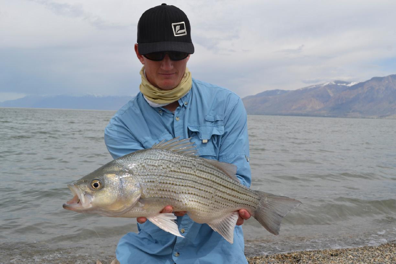 Saltwater fish utah utah fishing where to go fly fishing for Salt lake city fishing
