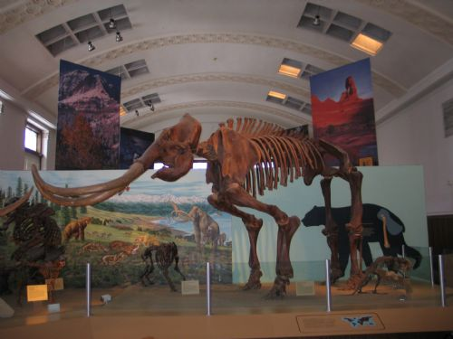 Mammoth bones from U of U Museum of Natural History